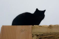A black cat on the roof