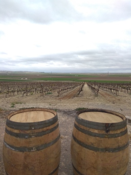 González Palacios vineyards