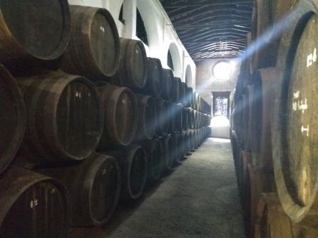 Halcón winery